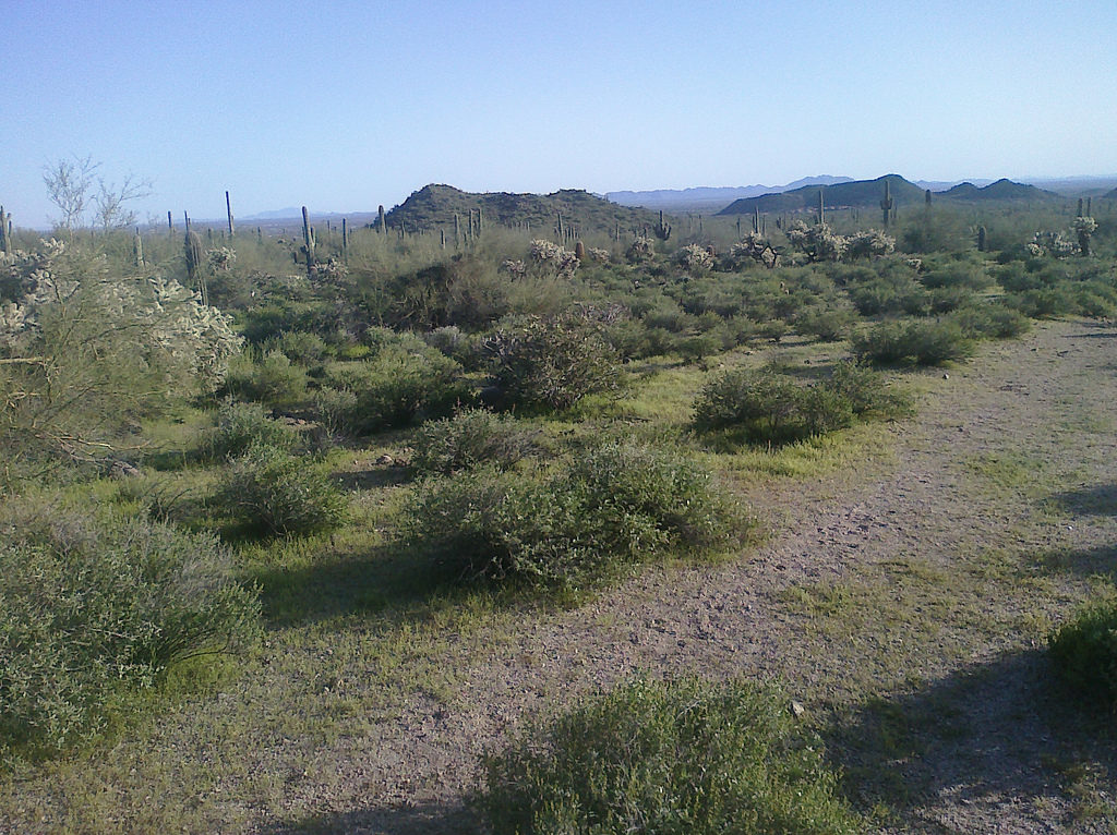 Usery Mountain Park